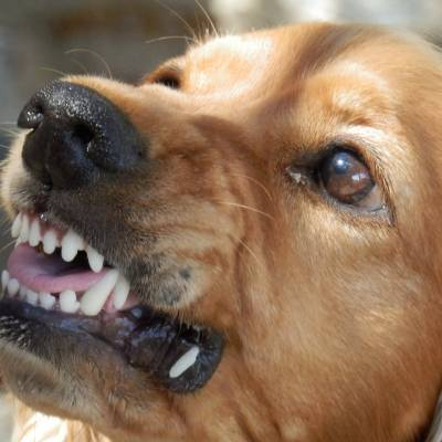 WHO IS LIABLE FOR DOG BITES IN FLORIDA?